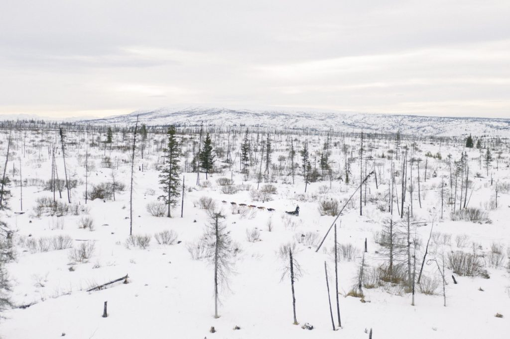 A colour photograph of a snowy and sparsely forested taiga landscape. A sled pulled by dogs traverses the woody trees from right to left, and snow-covered hills can be seen in the background.