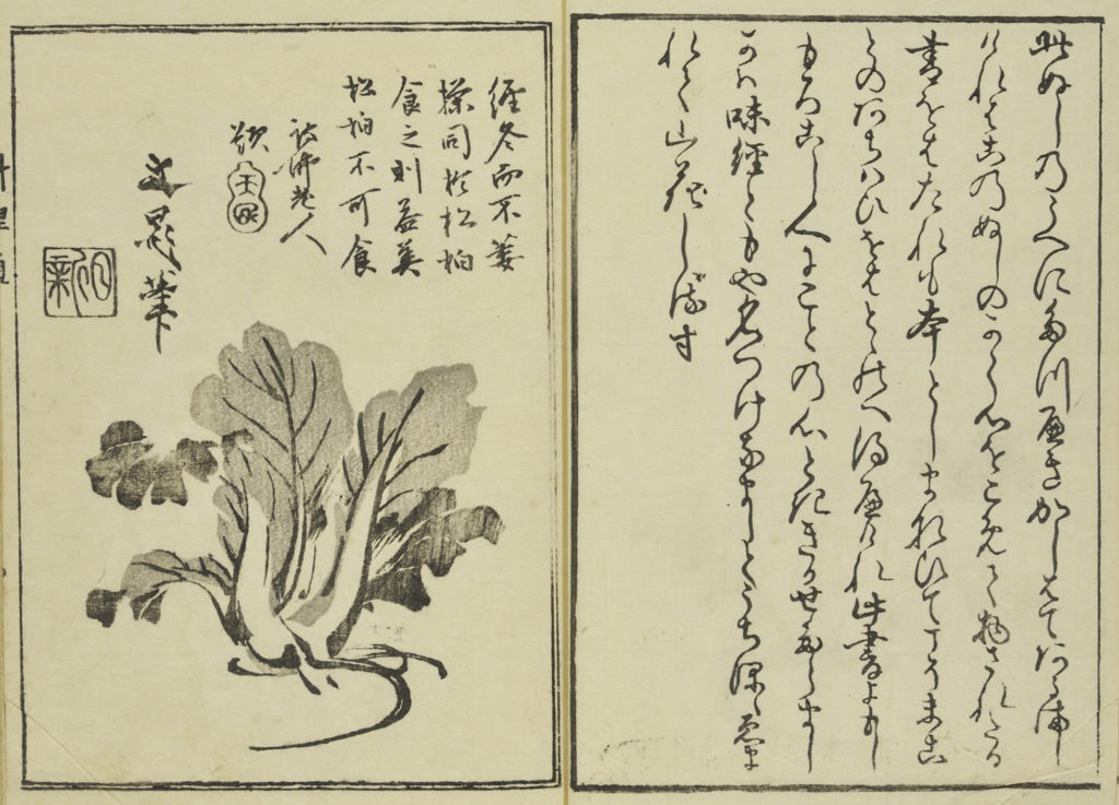 A page from a woodblock illustrated cooking book showing a leafy vegetable and Japanese text.