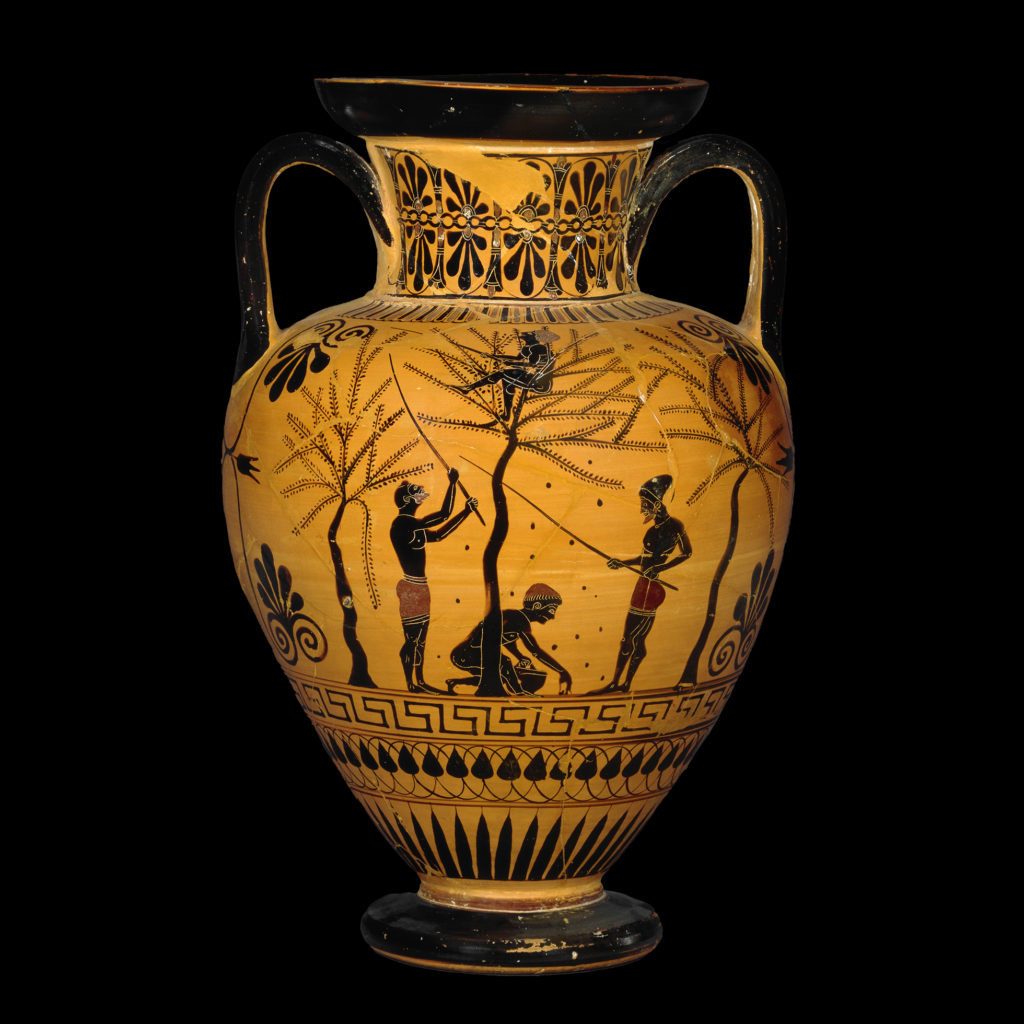 A black-figure amphora showing the olive harvest. People shake olives from a tree using long poles. Another is collecting the fruit from the floor, and another is sitting in the branches.