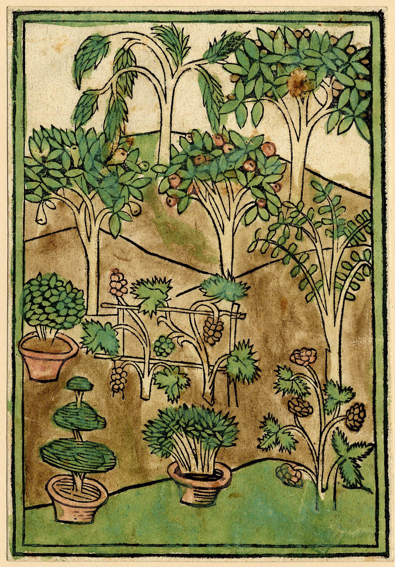 A print showing a variety of different plants. Smaller shrubs are shown in pots in the foreground and larger trees are shown in the background. Some of the trees have fruits.