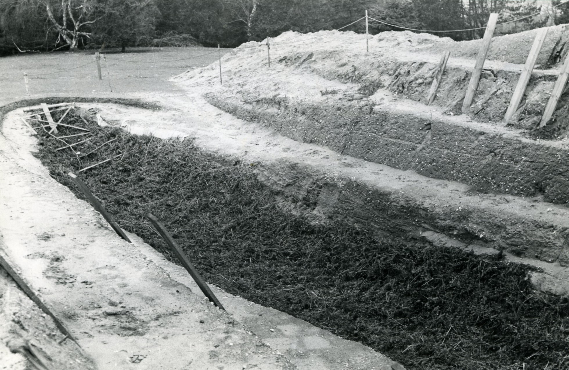 A black and white photo of the trench filled with bracken.