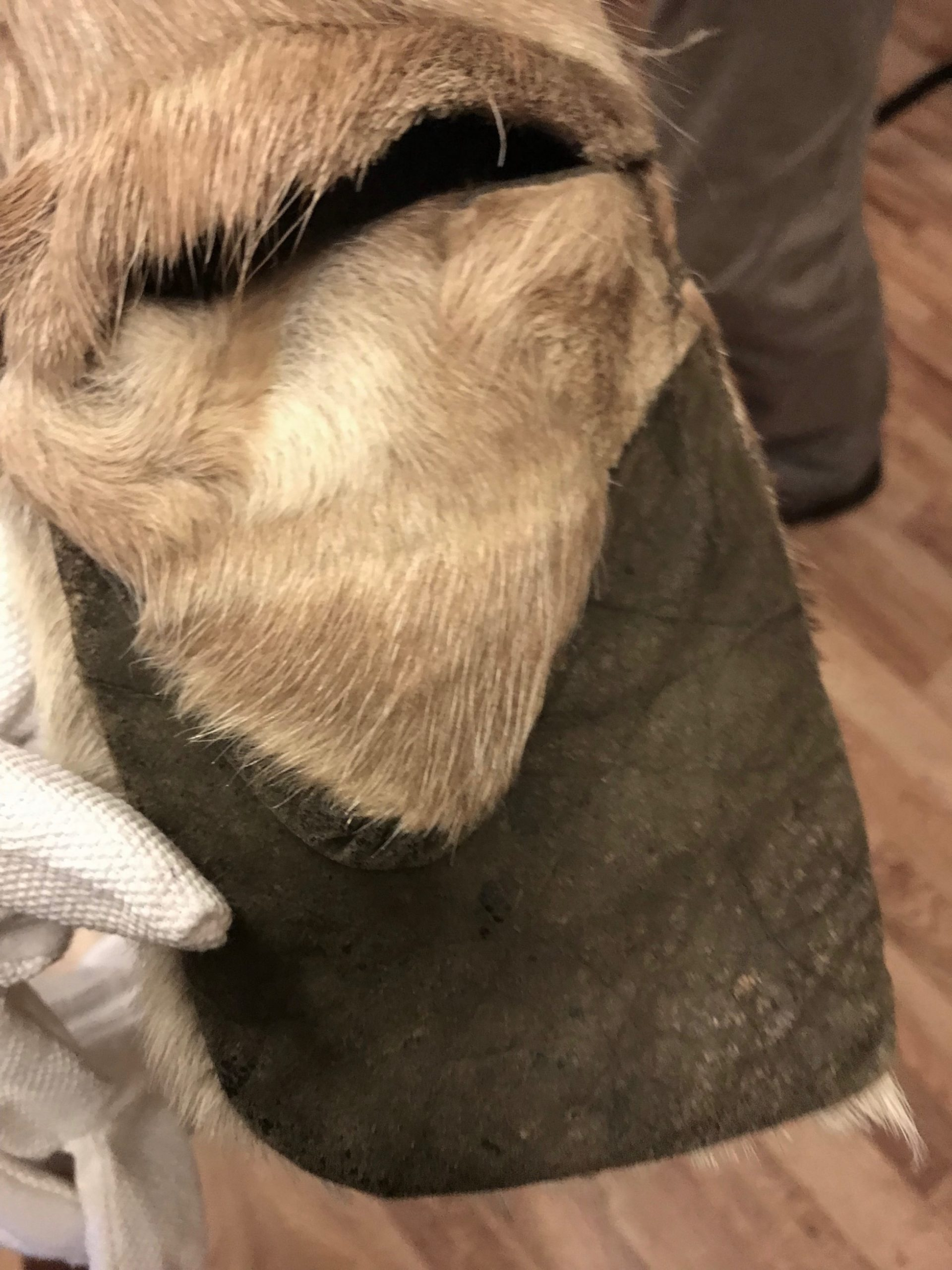 Close up photograph of an attached fur mitten on a parka.