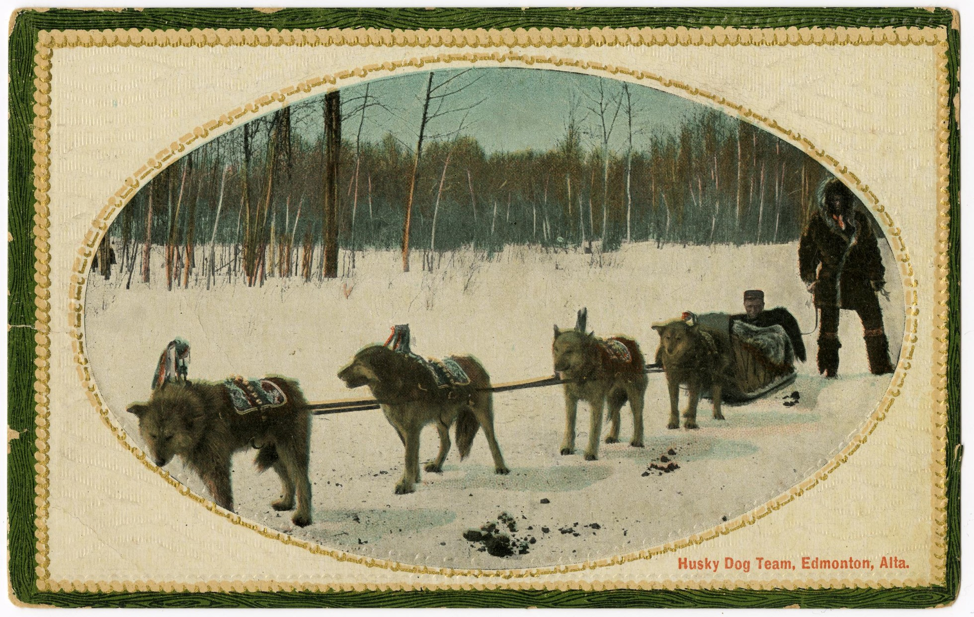 Postcard (black and white with colour), showing a man dressed in fur with a team of dogs pulling a sled in a forest.