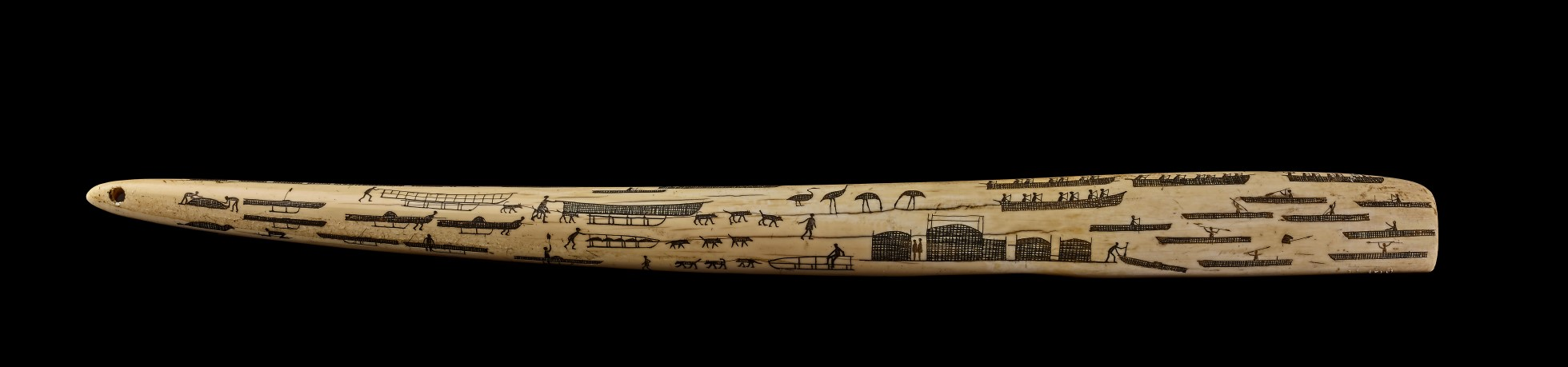 Engraved walrus tusk with scenes engraved and shown in black.