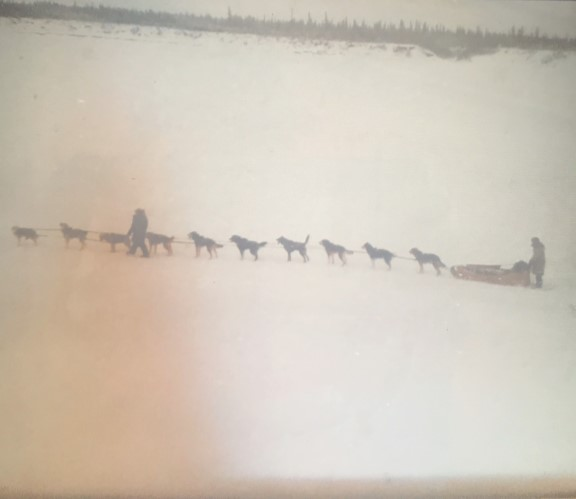 Photograph of a snowy scene. The silhouettes of a sled, and ten dogs can be seen. The photograph is clearly old and the quality is grainy.