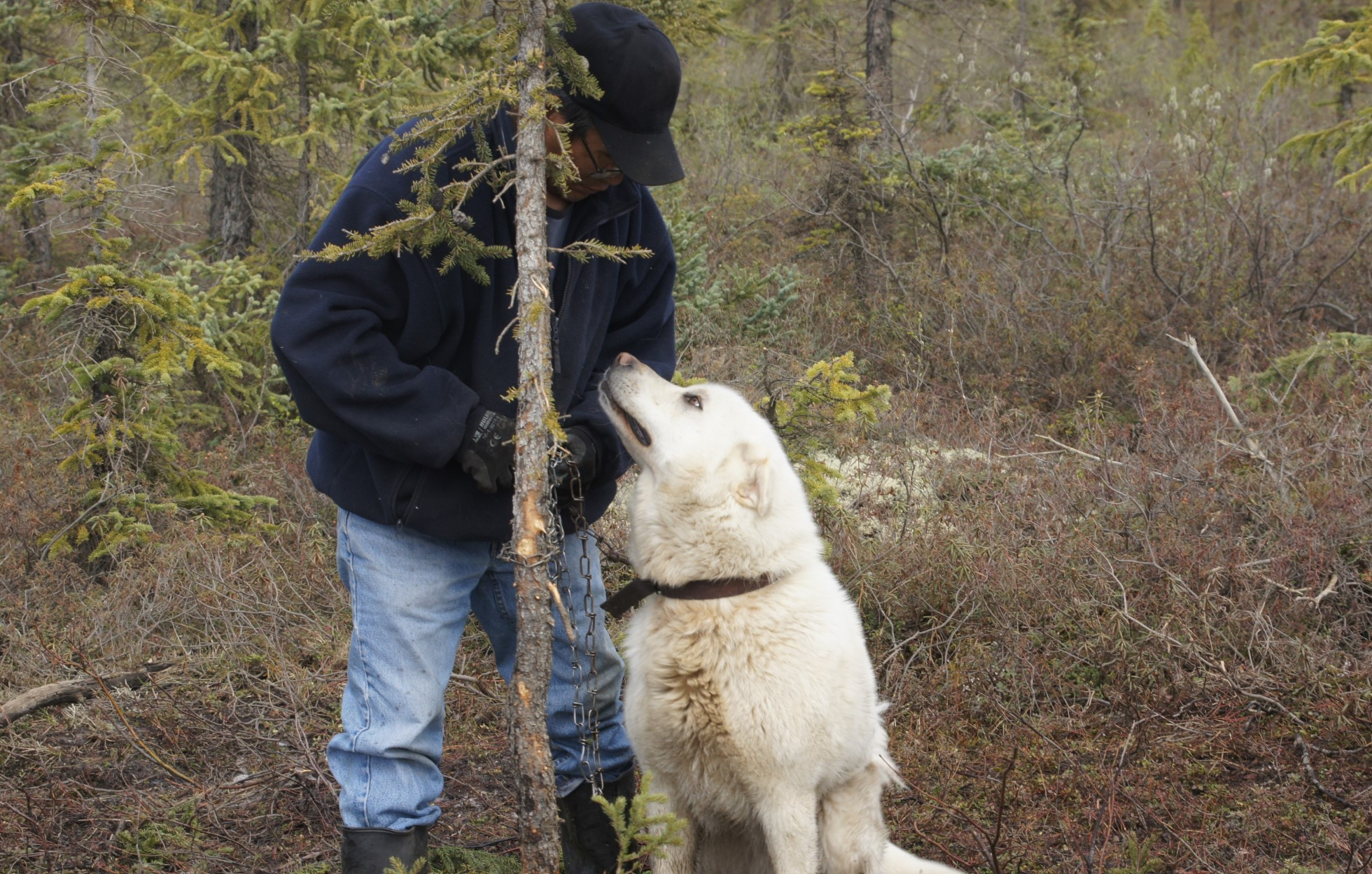 A man stands in a wooded area with a large dog who looks up at him.