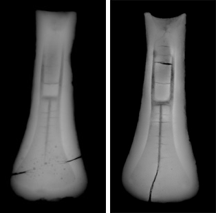Two x-rays showing the axe-head moulds side-by-side. Large cracks are visible on the sides and centre of the moulds.